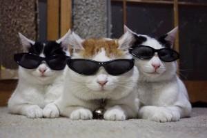 夏フェスにサングラスは必須です