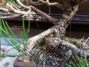 盆栽 メガネ