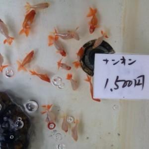 メガネ、金魚~口コミ~
