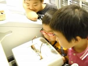 江戸川区 こども メガネ かわいい 職場体験