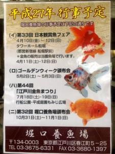 金魚~口コミ~