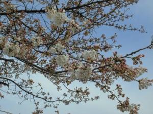 アイアンドアイ 桜 一之江