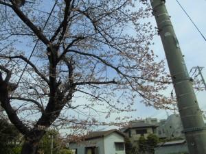 一之江 メガネ 桜