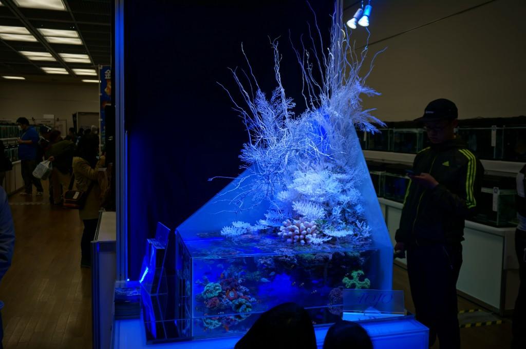 東京都 江戸川区 メガネ 観賞魚フェア