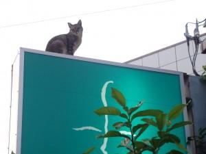 江戸川 メガネ 猫
