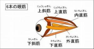 江戸川区 瑞江 メガネ 両眼視検査 評判