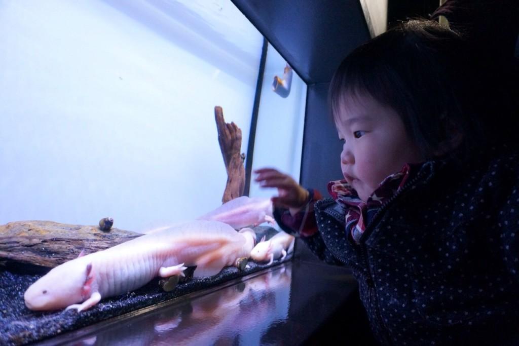メガネ 東京 水族館 両眼視 プリズム
