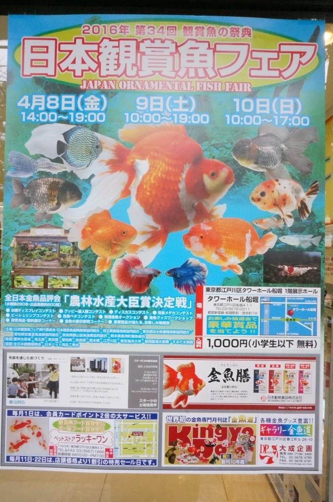 都内 江戸川区 メガネ専門店 観賞魚フェア