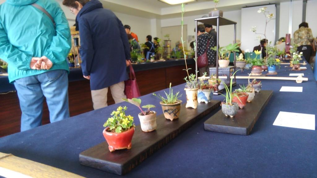 メガネ 山野草 野草の会 東京