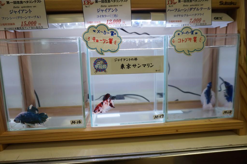 オークリー 観賞魚フェア メガネ 都内