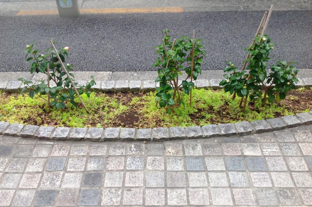 メガネ サングラス 補聴器 東京 江戸川区