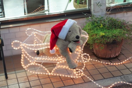 東京都内 こどもメガネ 子供眼鏡 専門店 クリスマスディスプレイ