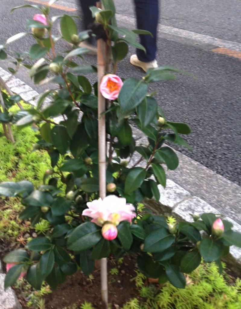 メガネ 補聴器 東京 江戸川区
