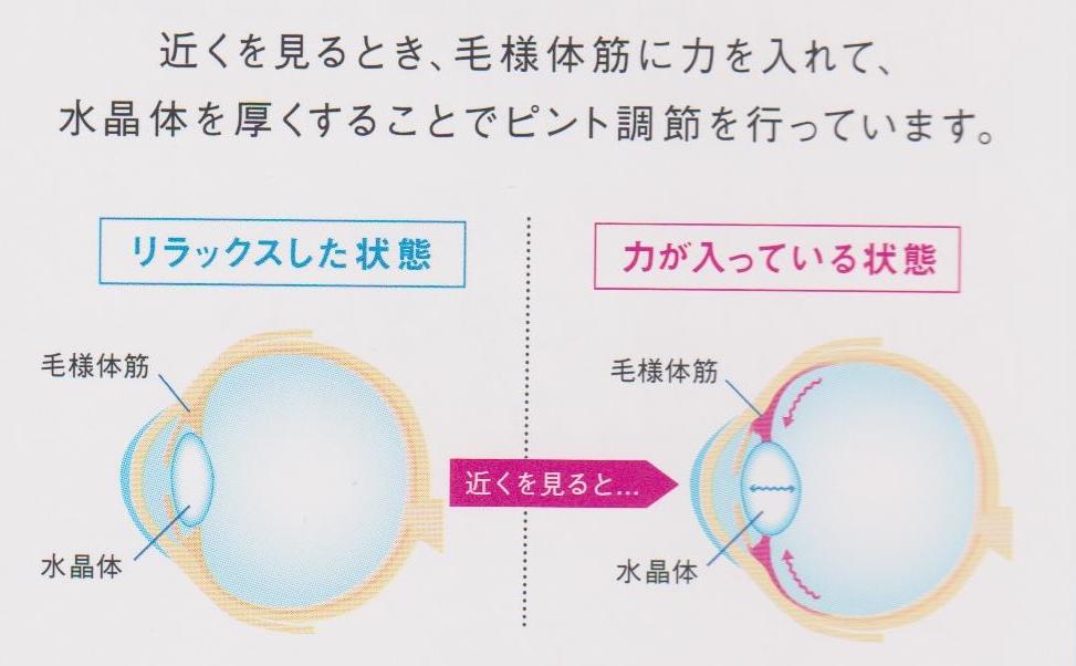 コンタクト 東京都 江戸川区 船堀 メガネ 視力検査